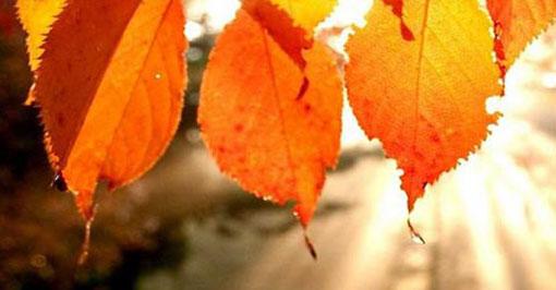 viendomovies_fall_092616